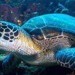 Top 5 Activities You Can Do Around Bunaken Island